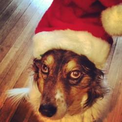 Santa Jake