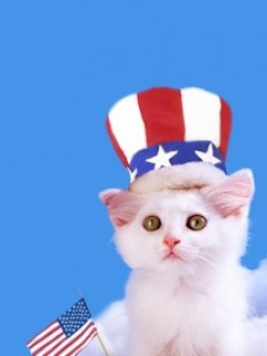 Happy-4th-of-July-from-Hepcatsmarketing.com-Cat-of-the-day-Photos-Happy-Wednesday-Too-4