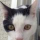 cat2-jpg