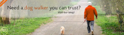 Want a dog walker you can trust? Visit our blog