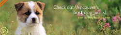 Check out Vancouver's best dog parks! Visit our blog